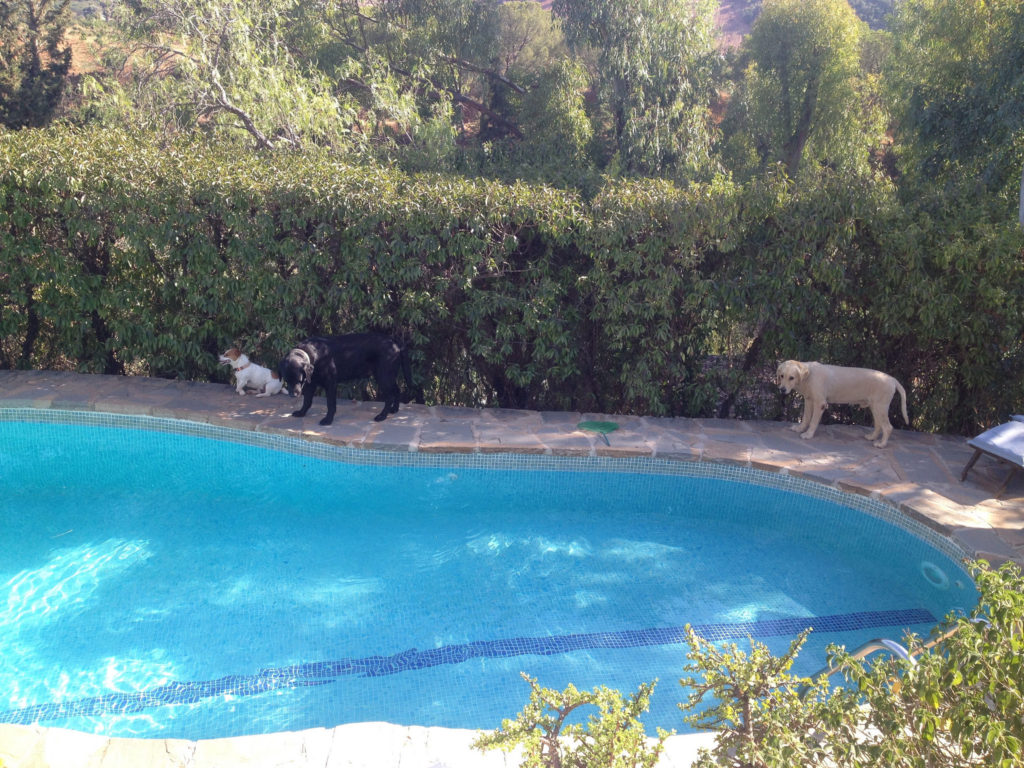 housesitting-pets-pool